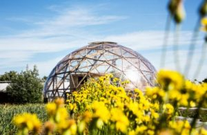 Dome_gule blomster i front